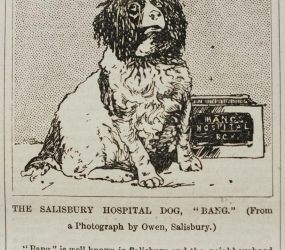 Newspaper article about funds raised by Bang with drawing of dog