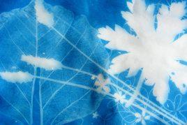 X-ray cyanotype print