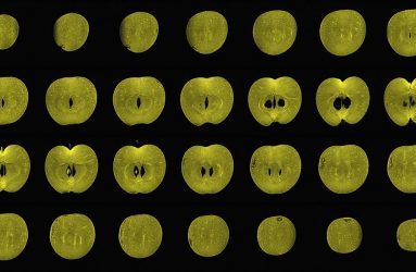 slices of apple as viewed by MRI scanner arranged in rows