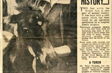 Salisbury Journal article describing pioneering cleft operation on horse