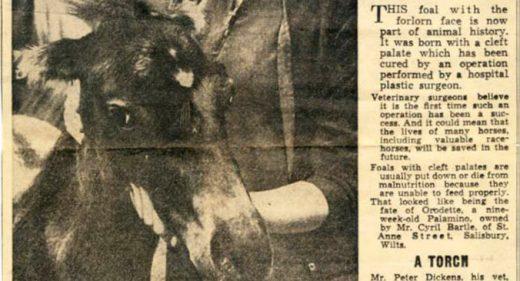 Salisbury Journal article describing pioneering cleft operation on horse