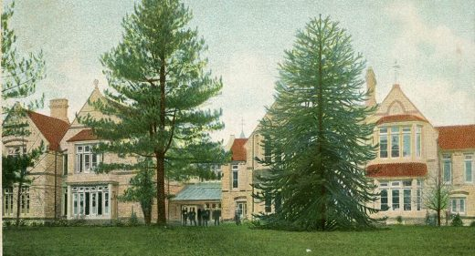 Two tall tress stand in front of the building